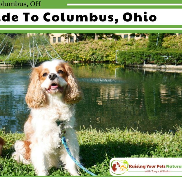 Mix · Dog-Friendly Vacations in Columbus, Ohio  Pet-Friendly